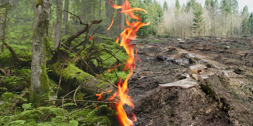 2020-10-01-thefab-petition-the-eu-must-protect-forests-not-burn-them-for-energy